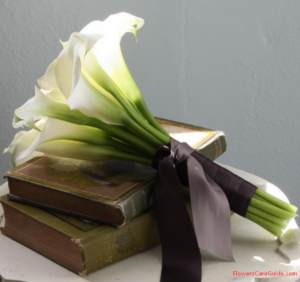 Using Calla Lily Flowers for Bouquets, vessels and decoration