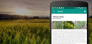 Top 10 plant identifier apps; plant identification made simpler